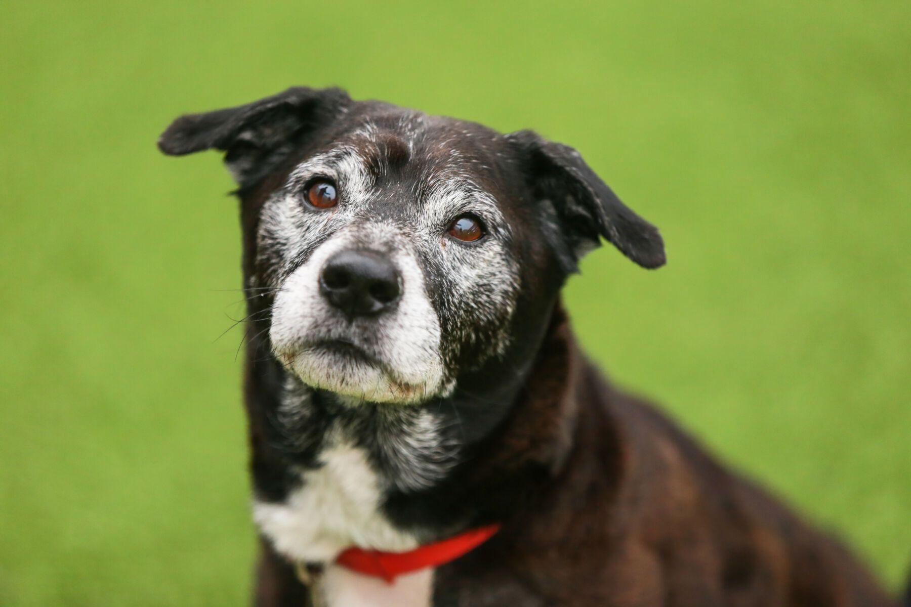 Battersea dog Img 4745